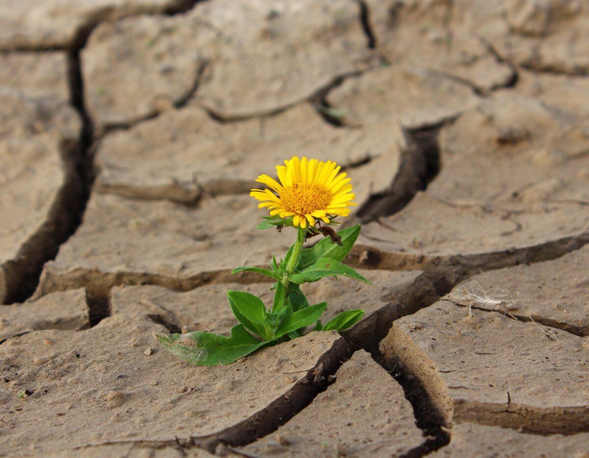 FN:s klimatpanel: Växtbaserat skifte nödvändigt för att rädda miljontals liv